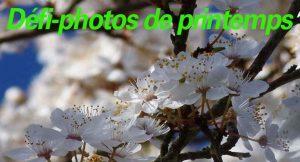 Défi-photos de printemps