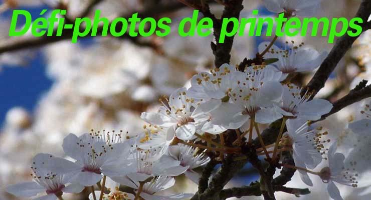 Église Verte : Participez à un Défi-Photos de printemps !